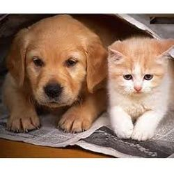 Puppy and Kitten Rolled in Newspaper